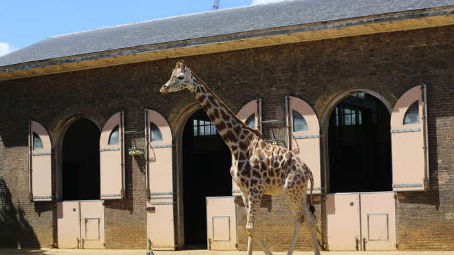 Giraffe House at London Zoo